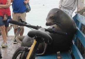 sealionandbike